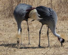1 day safari | Arusha National Park | Tarangire National park